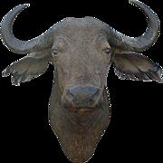 African Cape Buffalo Head Mount