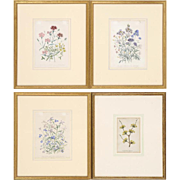 Set of Four Beautiful Antique Botanical Floral Illustration Lithographs Hand-Colored Framed in ...