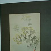 Mustard Plant  Japanese print   Vintage