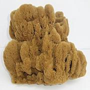 Large Natural Sponge