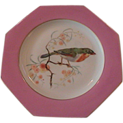 Lovely Rare Hand Painted Bird Plate