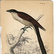 Jardine Senegal Lark-Heel Print