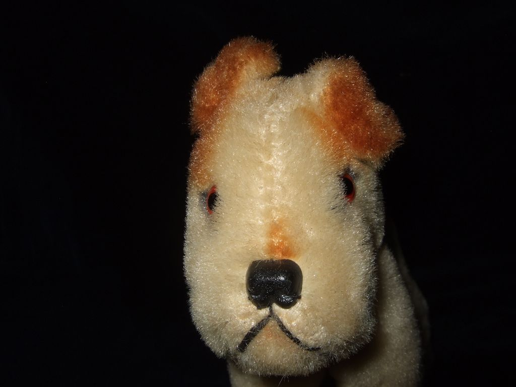 Great Condition Mohair  Dog