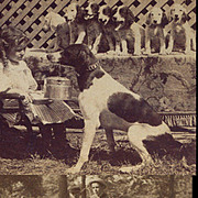 3 Antique Stereoview Photos, Mama Dog Holds Pail In Mouth, Puppies Wait, Kids w Pup, Goat Drawn Carriage 1890s-1901