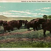 Postcard of Buffalo on the Wichita Game Reserve near Lawton Oklahoma
