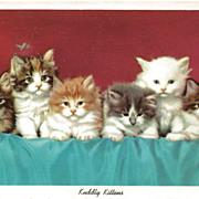 Kuddly Kittens Postcard