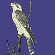 1985 Royal Worcester Peregrine Falcon Figurine