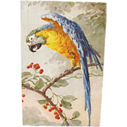 Catherine Klein Blue and Gold Macaw Postcard