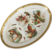 Dresden Platter with Parrot Pheasant Peacock Bird of Paradise