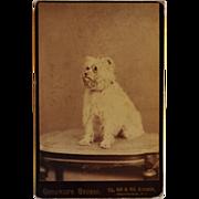 Cabinet Photograph ~ Adorable Terrier Dog