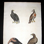 William Martyn Natural History Engraving Eagles 1785