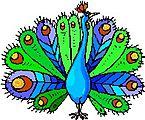 A Peacock Boutique