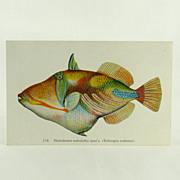 Hawaii and South Seas Curio Company Fishes Of Hawaii 238