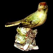 Borsato - Bullfinch - Small Treasure!