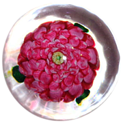 RARE Antique Clichy Pink Camellia Paperweight Exhibited