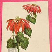 Art Nouveau Christmas Post Card Series No. 169 Wilting Poinsettia