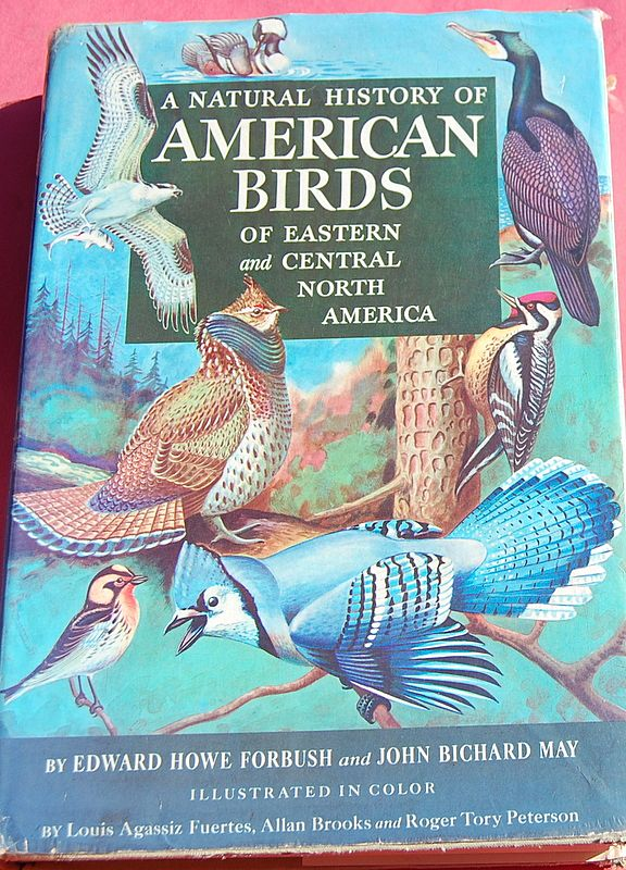 1955 A Natural History Of American Birds Of Eastern & Central North America