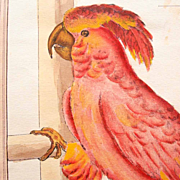 Hand Colored Copperplate Engraving Parrot Cockatoo 19. Century