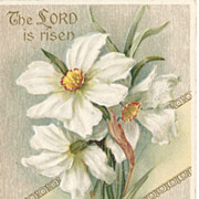 "Easter Post Card - Paper Whites ""The Lord is Risen"""