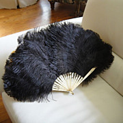 Large Antique Victorian Black Ostrich Feather c 1880s