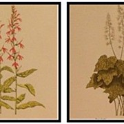 Pair of Botanical Watercolor Paintings by Louise Pflasterer