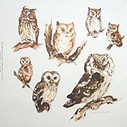 Owleyes- A vintage Lithograph