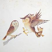Owls-George