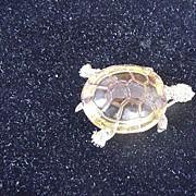 Ciner Turtle Pin/Brooch