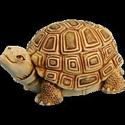 Harmony Kingdom One Step Ahead Turtle Box Figurine