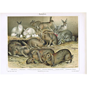 Bunnies: Antique Chromolithograph with Rabbits.