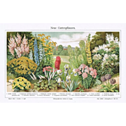 Garden Plants. Chromo Lithograph from 1900, Artist signed.