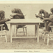 Chimpanzees having Tea. Vintage Postcard 1930s