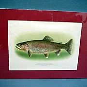 REDUCED Rainbow Trout Lithograph Print Signed Fly Fishing Art Mint