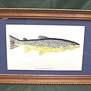 SALE Brown Trout Fish Print Framed
