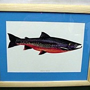 SALE 50% OFF Arctic Char Framed Fish Print