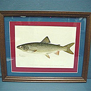 Lake Trout Framed Fish Print Signed Denton  50% OFF