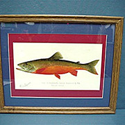 SALE Denton Signed Print of Canadian Red Trout Framed