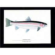 SALE Print Steel Head Trout