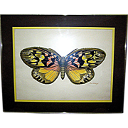 Sera graph Print, Butterfly, original, signed and dated, Paul Richards, 1973