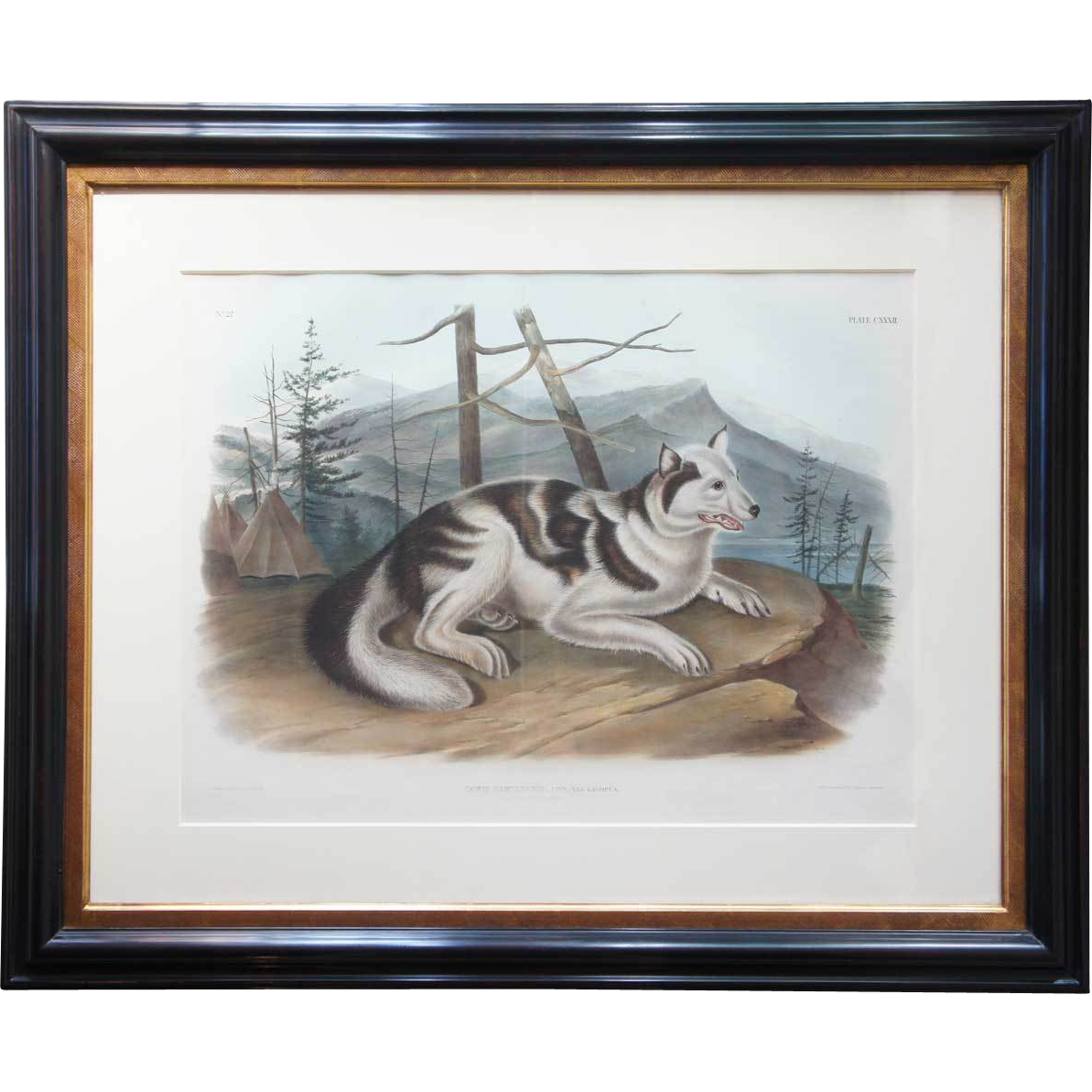 American Furniture Denver Co JOHN WOODHOUSE AUDUBON Colored Lithograph, Hare-Indian Dog ...
