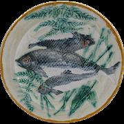 Wedgwood Majolica Fish Plate Rare Coloration