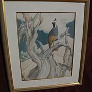California watercolor of quail in a natural setting by MUGGS VAN SANT contemporary of Millard Sheets