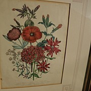 18th century English botanical hand colored engraving with ornate hand drawn mat
