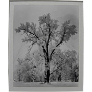 "ANSEL ADAMS (1902-1984) Special Edition Yosemite photo ""Oak Tree, Snowstorm"" printed"