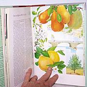 Garden Book Flowers Botanicals 1st Edition Lush Floral Plates