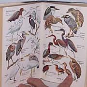 Audubon Water Bird Guide 1st Edition 1951 Full Color Plates