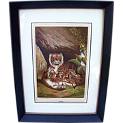 """Scarce 1890 """"Tiger & Family""""  Chromolithograph Print by L. Prang & Co. - Published by Selmar Hess N.Y."""