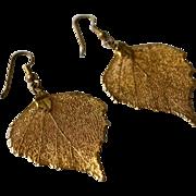 Nature's Beauty 24kt Gold Dipped Oak Leaf Earrings