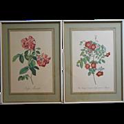 Roses Prints Pair Framed Vintage Pink Green Cream Painted Wood Frames