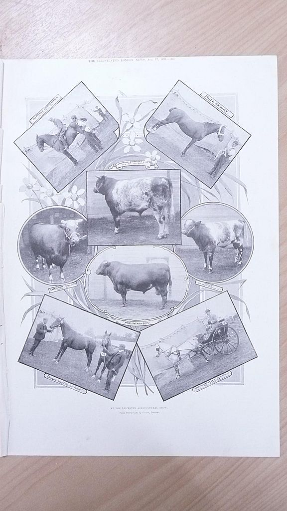 """Full Page Illustrated London News  1895 """" At The Leicester Agricultural Show"""""""